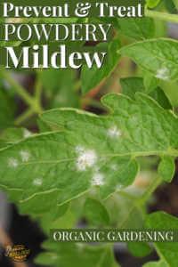 "Leaf with powdery mildew spots with text, ""Prevent and treat powdery mildew"""