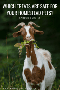 Safe treats for your homestead pets