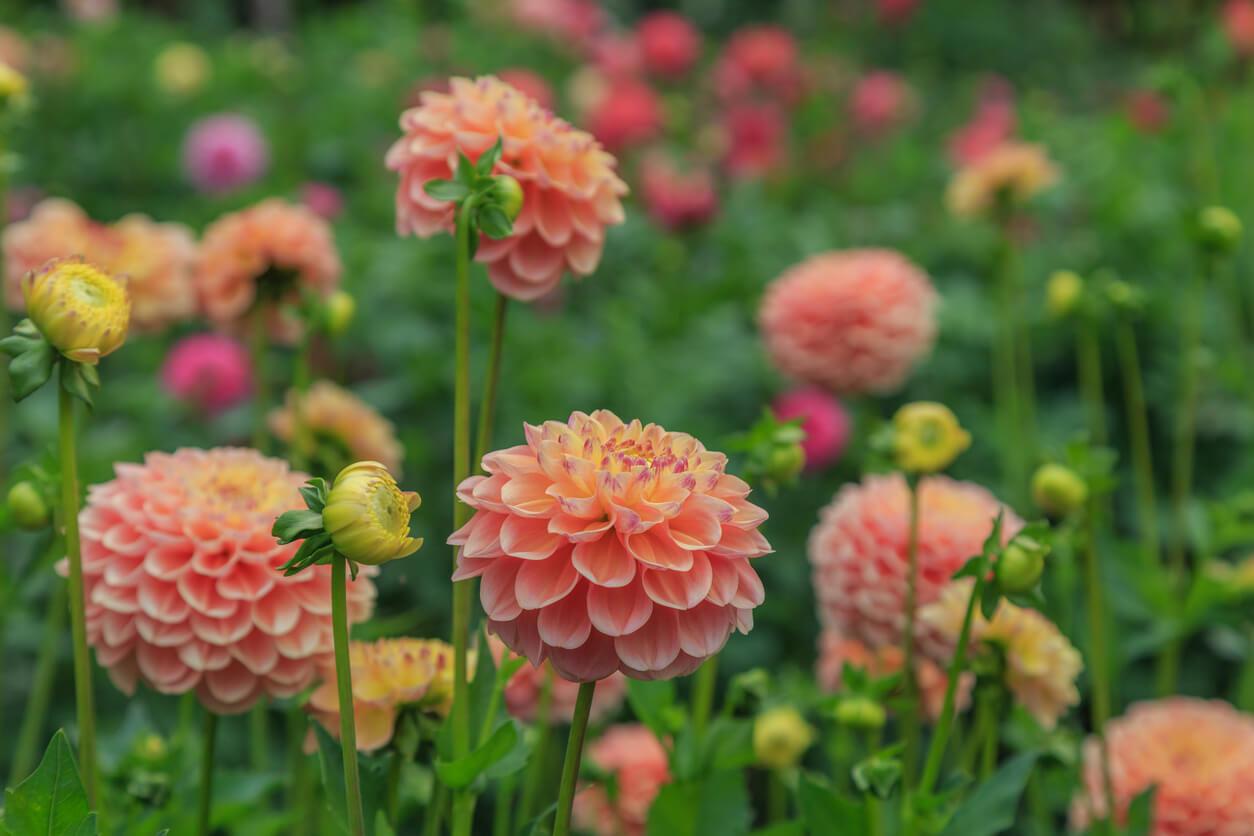 August Flower Gardening