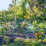 August Garden Happenings