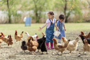 Safe food for your homestead animals