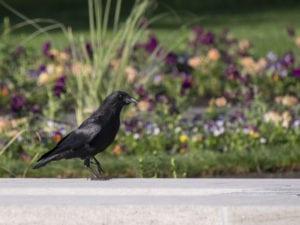 Protect Garden from Birds