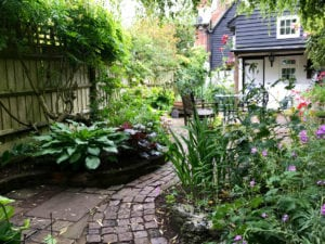 protect your summer garden from powdery mildew