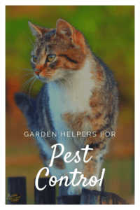 Garden Helpers for Pest Control (2)