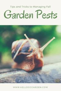 Managing Fall Garden Pests