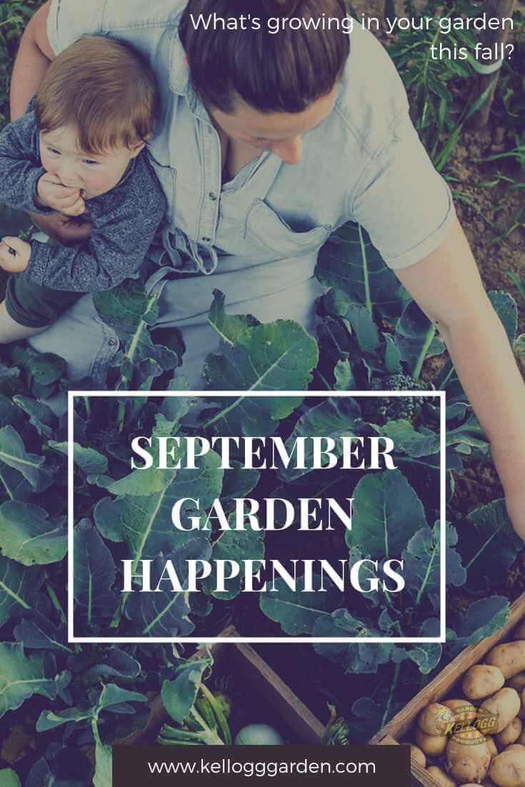 September garden happenings