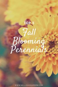 Top 5 Blooming Perennials