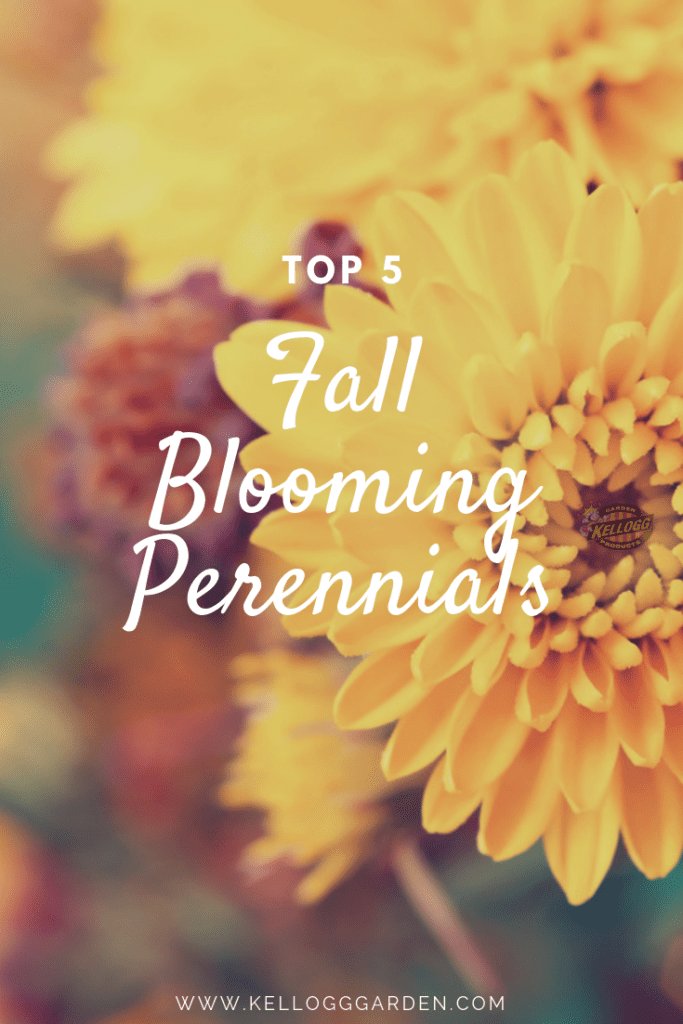 Top 5 Blooming Perennials
