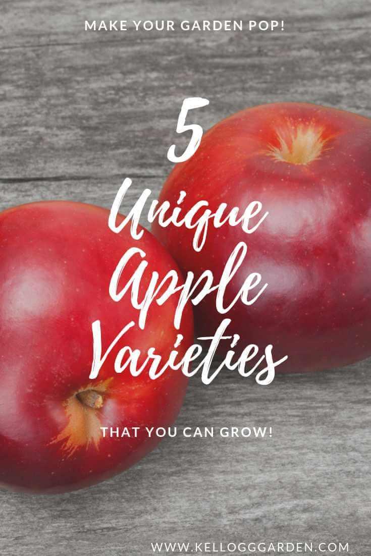 Unique Apples