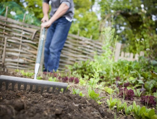 Amending your soil for fall planting