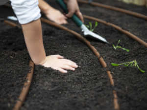 toddler hands in soil