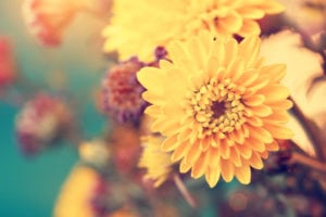 fall-blooming-flowers-to-plant