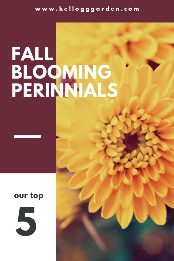 Fall Blooming Perennials PI