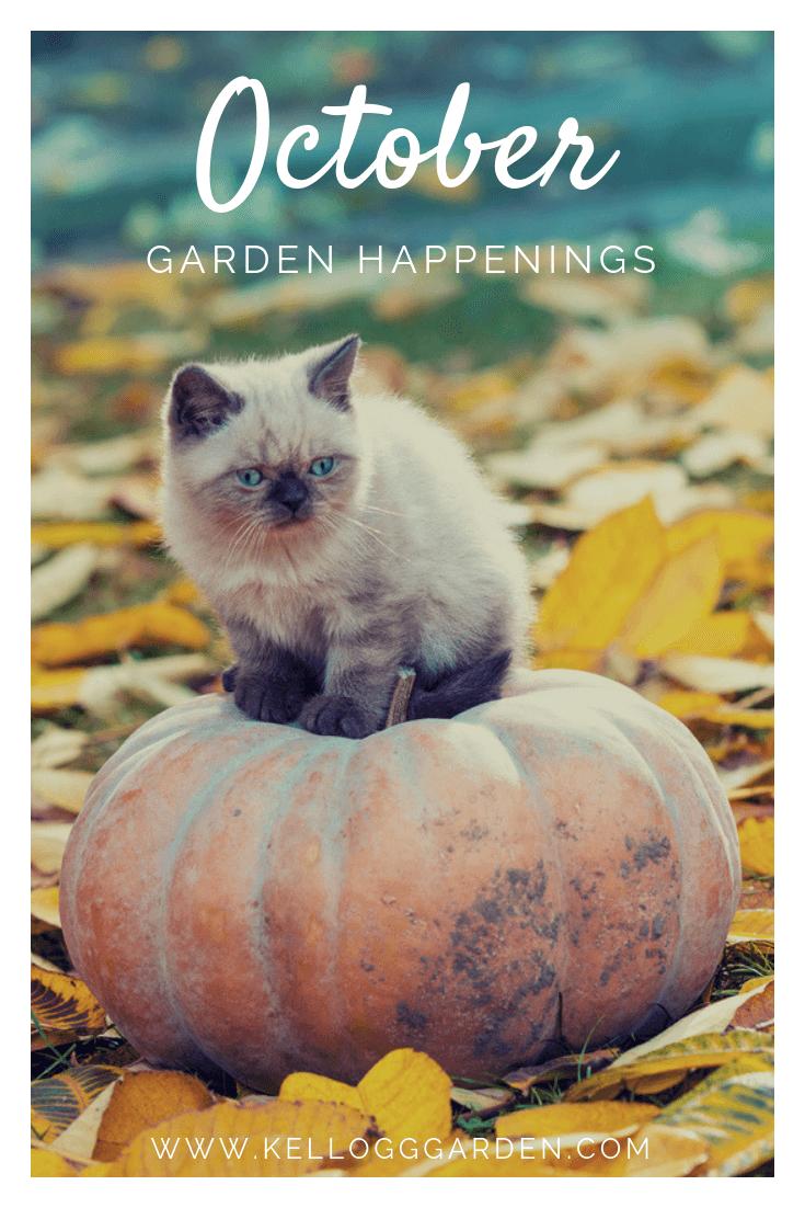 Cat sitting on pumpkin