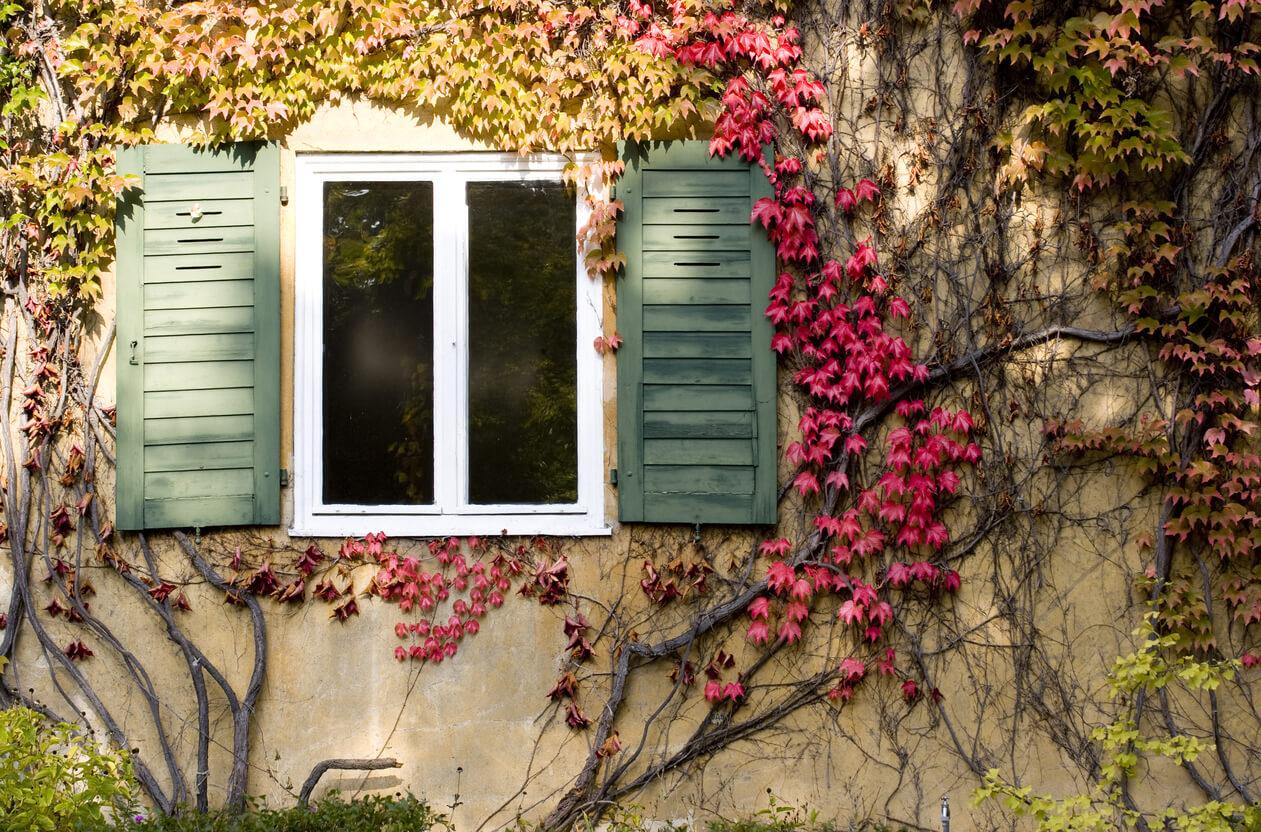 Autumn colorful garden ideas