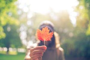 colorful autumn garden