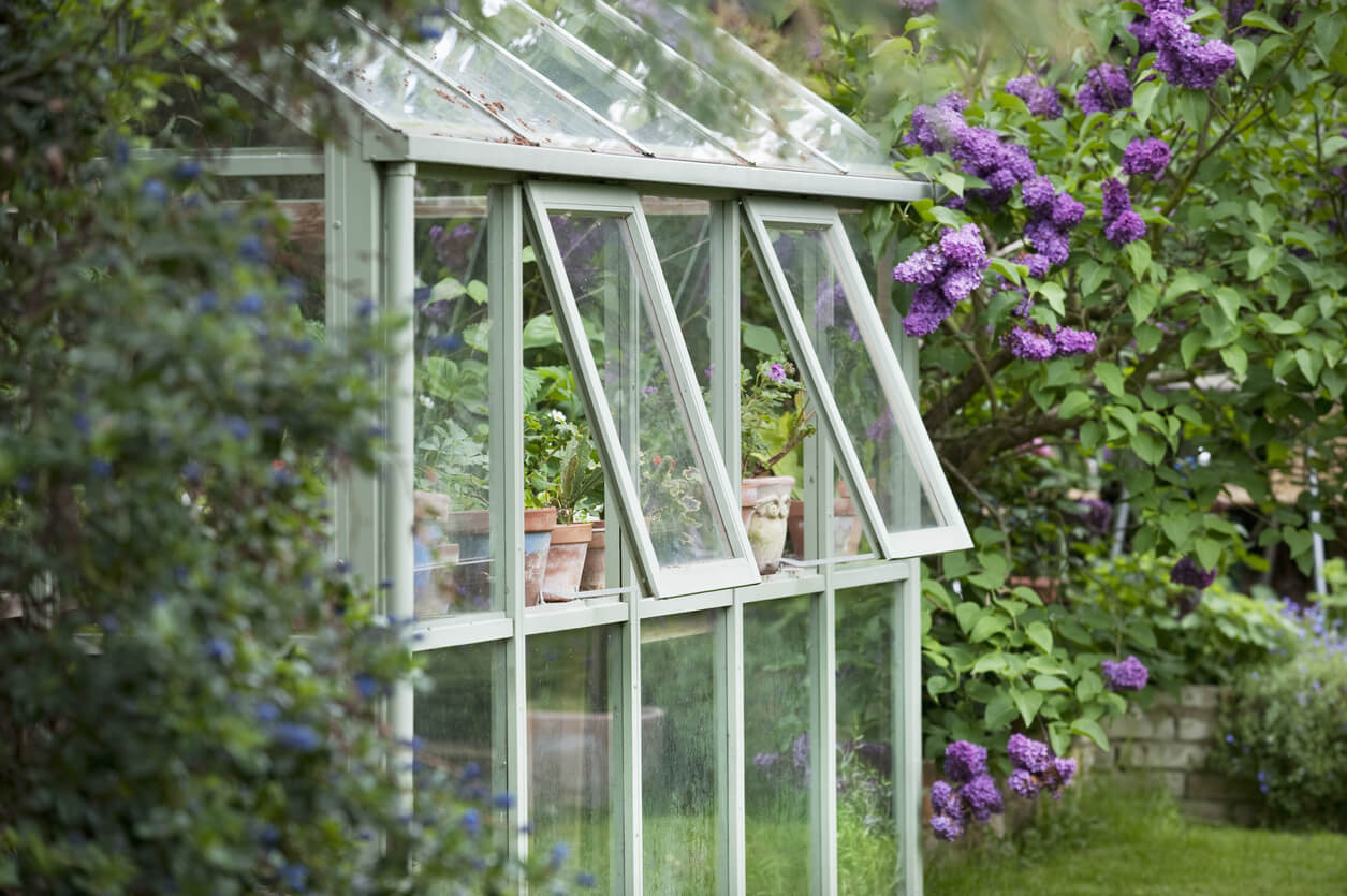 Greenhouse in backyard