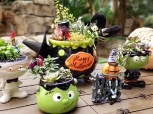 A variety of halloween themed succulent arrangements