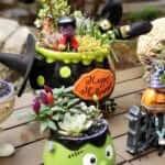 Halloween succulent arrangement