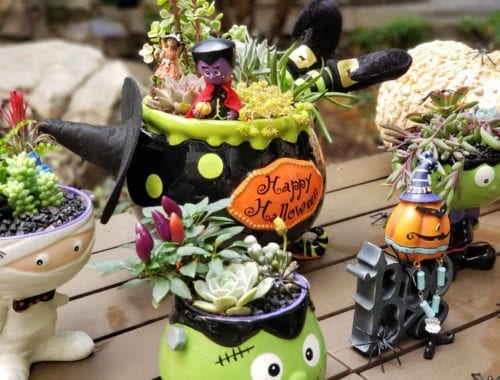 Halloween succulent arrangement