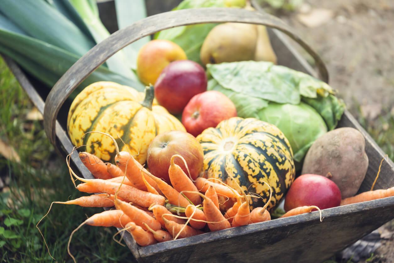 garden harvest in basket