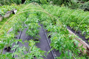 How to extend your growing season