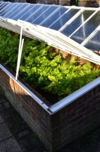 how to extend growing season