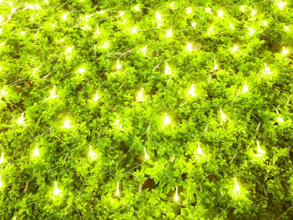 lights protect plant in cold