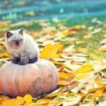 Kitten on pumpkin in October garden