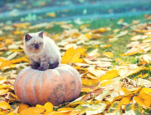 Kitten on pumpkin in October garden