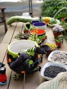 succulent halloween materials