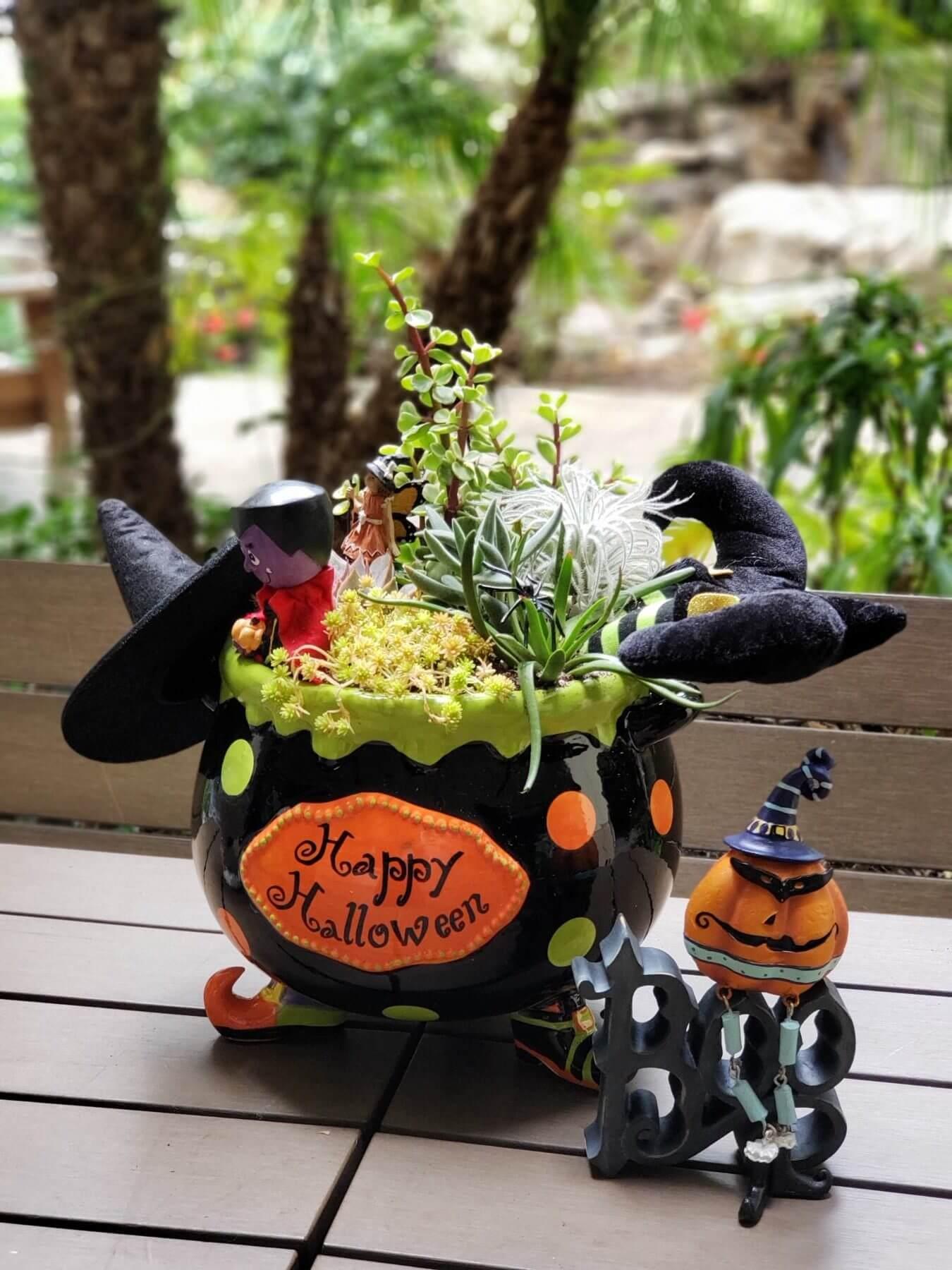 Halloween succulent arrangement witch