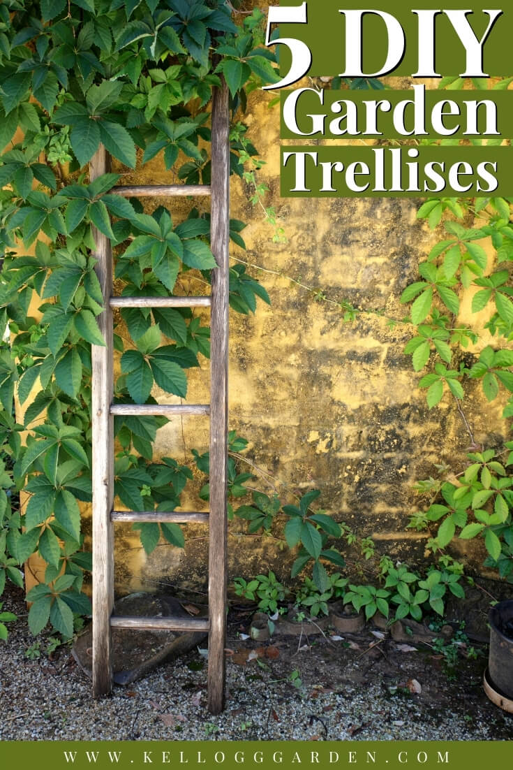 "Vines growing up an old ladder with text, ""5 DIY Garden Trellises"""