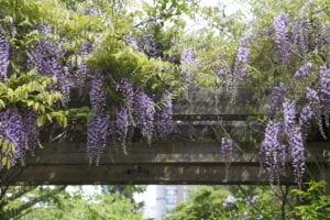 Garden Trellis for Flowers