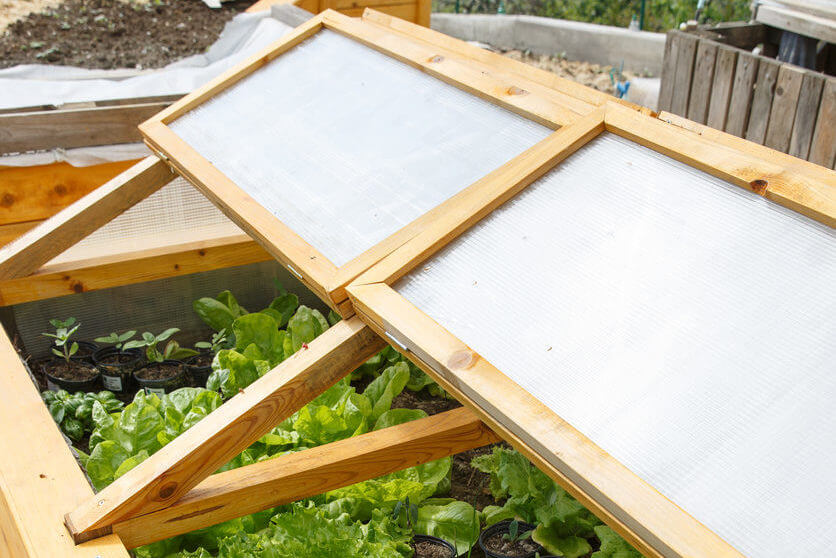 Homemade greenhouse raised garden bed with young lettuce and other vegetables being grown. Modern gardening, winter production, organic gardening, homegrown produce concept.