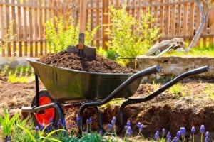 Soil in wheelbarrow