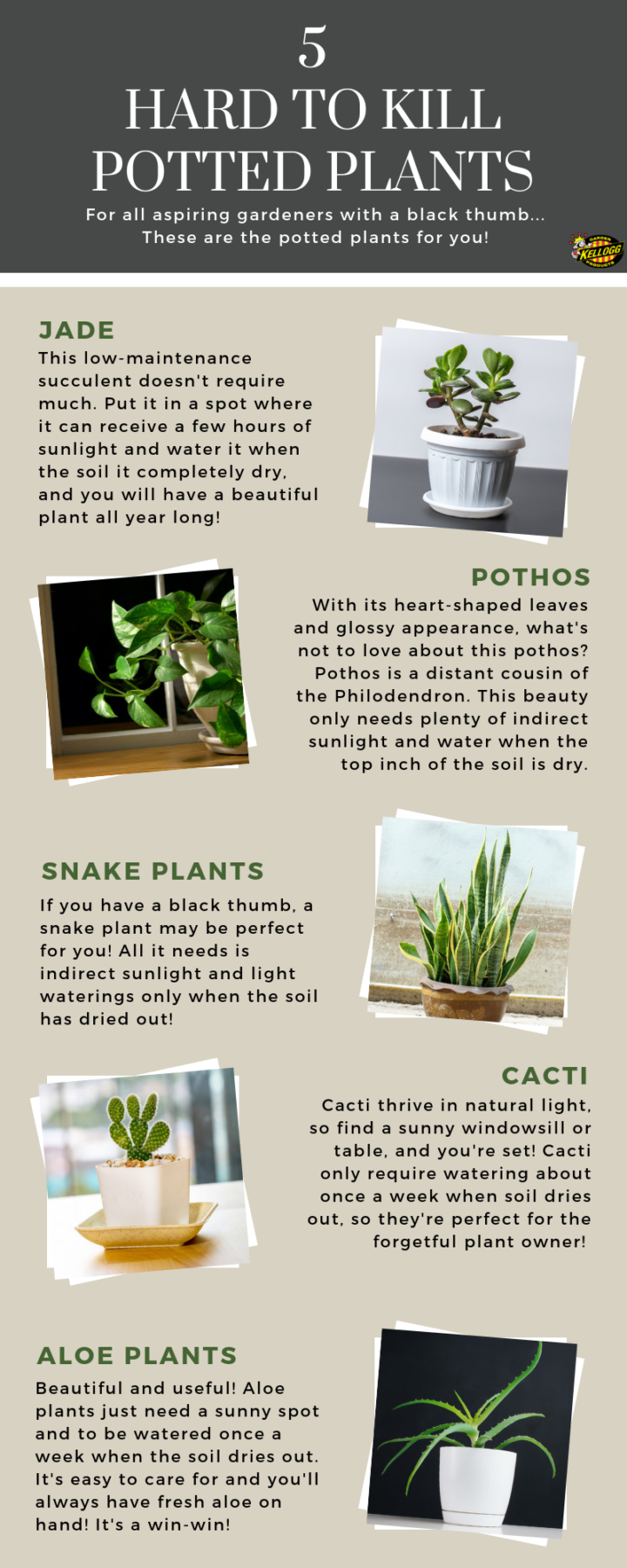 Hard to Kill Potted Plants
