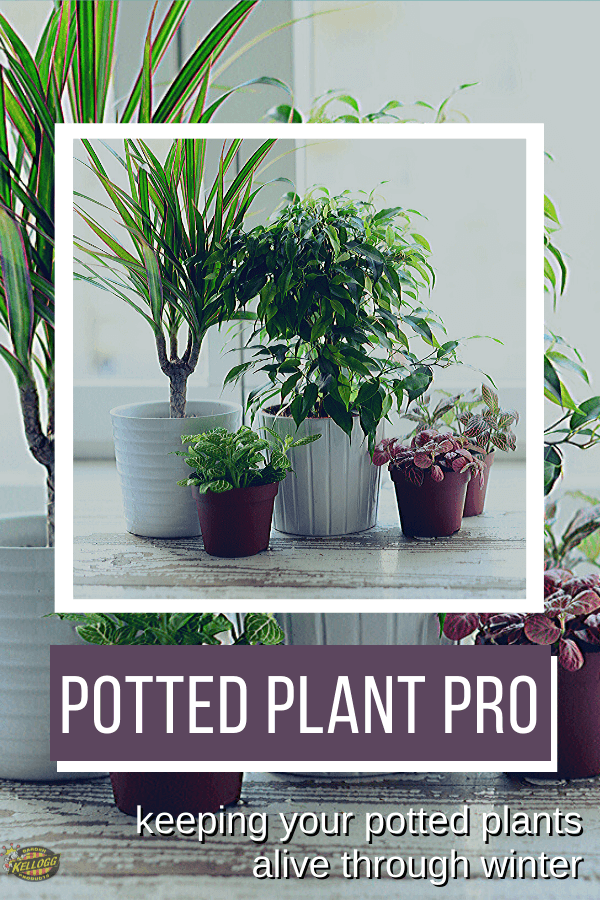Potted plants over winter