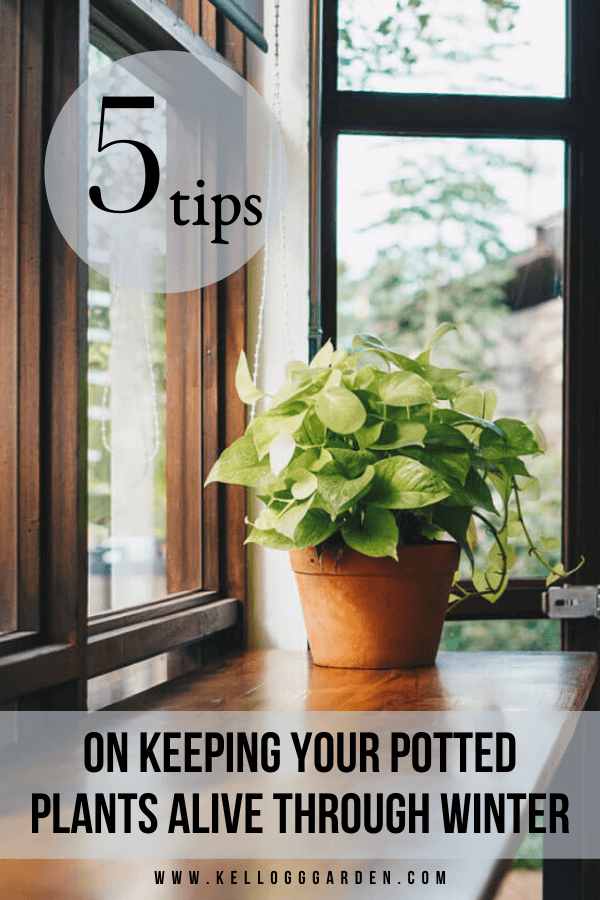 Tips to keep potted plants alive