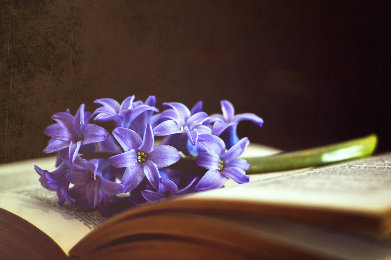 purple flowers on book