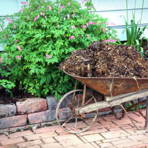 Antique Wheelbarrow filled with bark mulch for the flowerbed