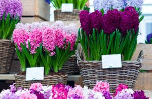 Chelsea Garden Flowers