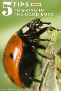 """Close up image for Pinterest of a ladybug on a leaf with text reading, """"5 tips to bring in the good bugs"""""""