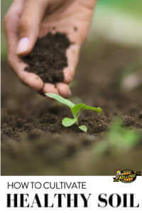 """Hand placing soil near a seedling with text, """"How to cultivate healthy soil"""""""