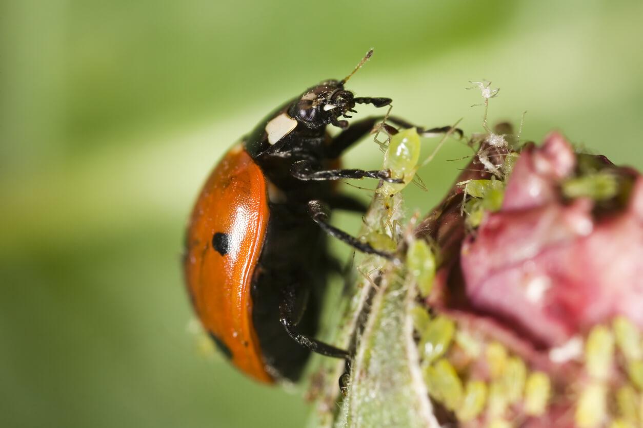 Close up of lady bug crawling on leaf