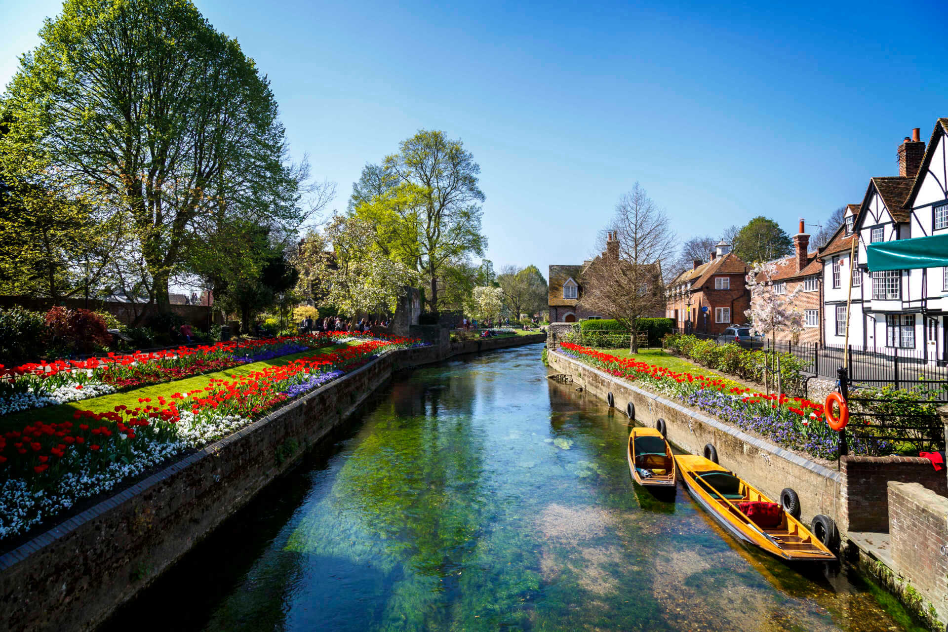 Canterbury Canal flowers blooming