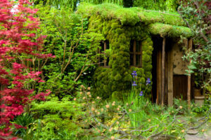 House garden in the UK
