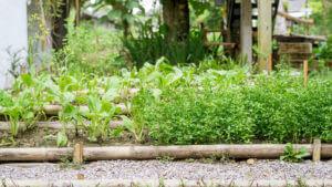 Organic green vegetable garden in a house.