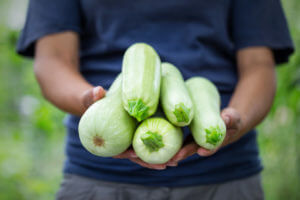 Man holding green zucchini harvest in his hands.