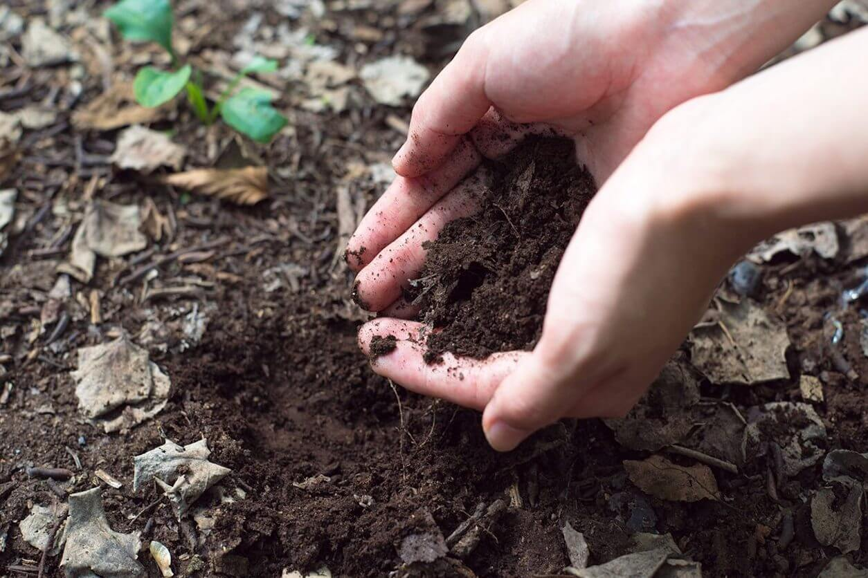 soil from the forest floor